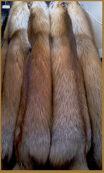 Продам шкуры лисы