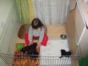 Домашни манеж для содержания щенков или котят 100х100хh60 см