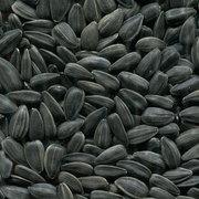 Компания Никагро закупает зерновые и масличные у производителя