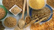 купим рапс,  пшеницу,  ячмень
