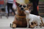 Международная перевозка животных